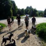 Tréningový dogtrekking, test sandálov a Merrellov