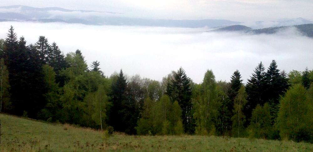 Les, hmla, stromy, kopce